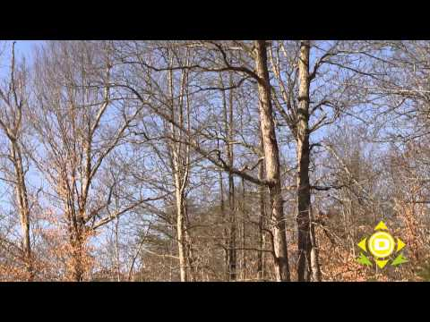 Natural Navigation Part 1 - Determining Direction Using Trees
