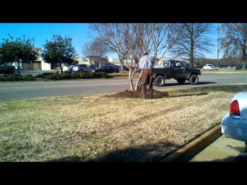 PPLM preparing tree ring for mulch
