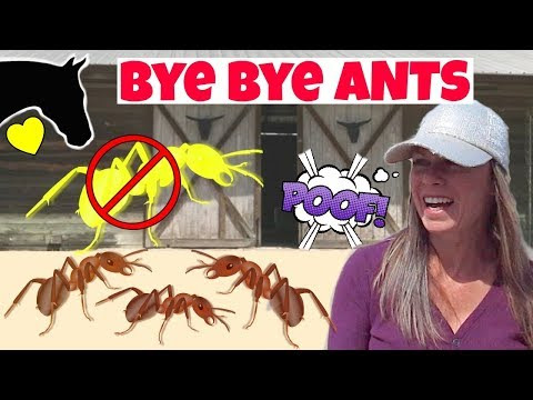HOW TO Control Ants around the BARN