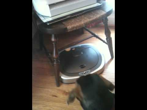 The Dog and the Automatic Trash Can Lid.MOV