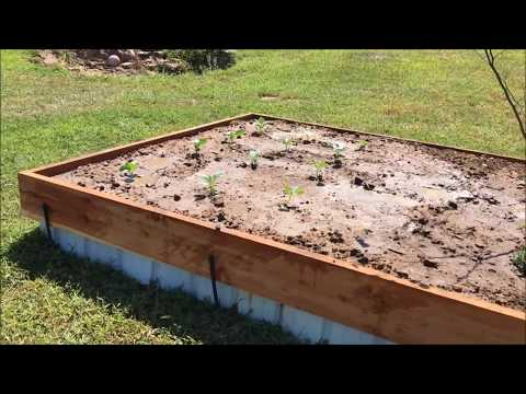 9-12-17 Update & Fall Gardening