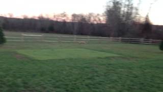 Gracie running2