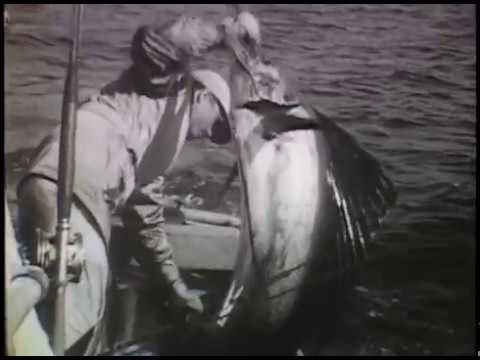 Sailfish sport fishing in Florida from 1950s till present