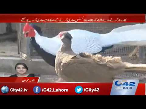 42 Breaking:  2007 act of wildlife to be amended, license to be ensured on all birds sellers