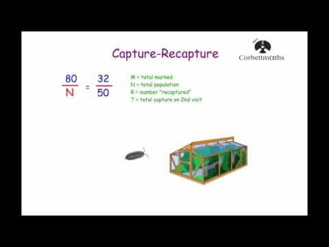 Capture Recapture - Corbettmaths
