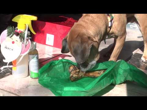 How to Eliminate Cat Pee Smell and Dog Urine Smell Permanently and In Minutes