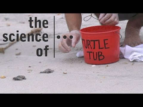 Endangered Sea Turtles... Threats and Solutions