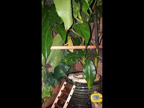 Custom Chameleon Enclosure / Cage Set Up How To!!!!