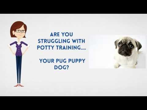 How To Potty Train A Pug Puppy | House Train A Pug Fast