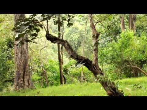 Kabini   Spotted Deer Alarm Calls 01
