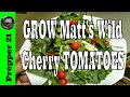 What A Wonderful Matt S Wild Cherry Tomato
