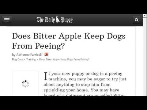 What To Spray On Carpet To Keep Dogs From Peeing