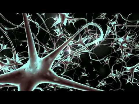 The Neuroprotective Role of Noradrenaline