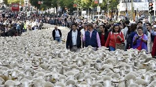 Мадрид и овцы: что такое «трашуманция»? (новости)