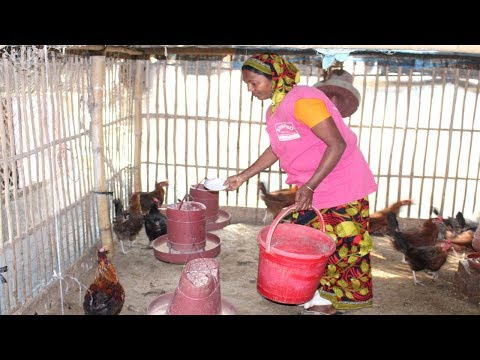 Starting a Business - How to Start a Business Free Range Chicken Farm and Organic Chicken Farming