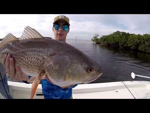How to catch Redfish In Tampa Bay