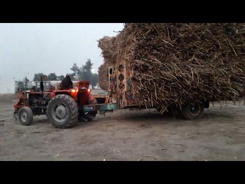 Massey 240 & FIAT 480 Pulling Sugarcane Trolley in Sugar Mill | Powerful Tractors