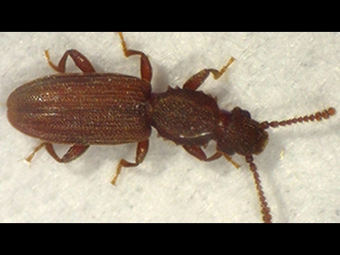 Get Rid of Pantry Beetles