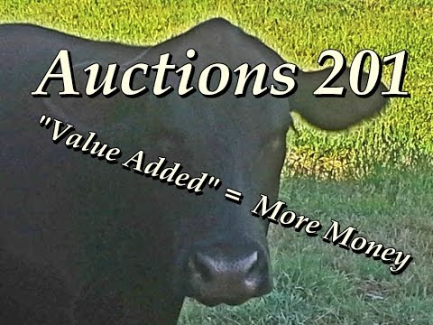 Cattle Auctions 201 - Value Added