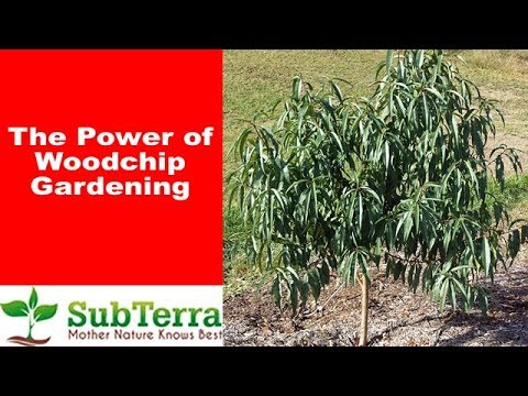 The Power of Wood Chips and Back to Eden (BTE) Gardening