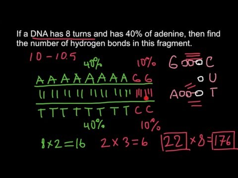 DNA:  how to solve genetics problems
