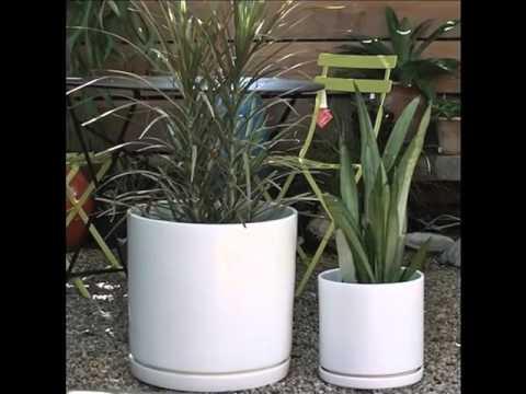 White Ceramic Flower Pots | Picture Set Of Beautiful & Decor Work