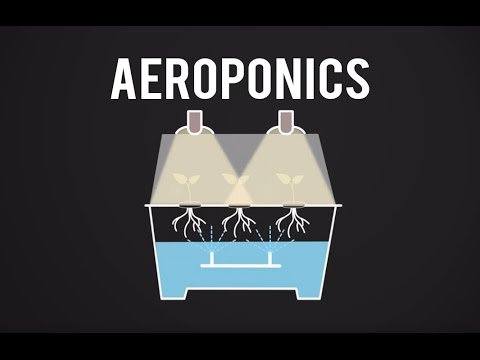 What Does An Aeroponic Propagation System Do?