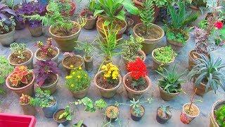 Garden & Flower Exhibition Shopping   Shopping Video