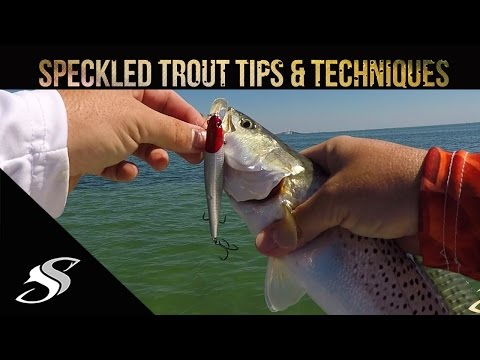 Speckled Trout Fishing + Tips - Unleashing the MTB Baits