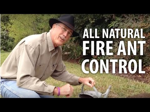 All Natural Fire Ant Control - The Dirt Doctor