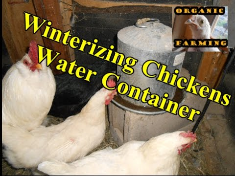 How To Keep Water Dish From Freezing