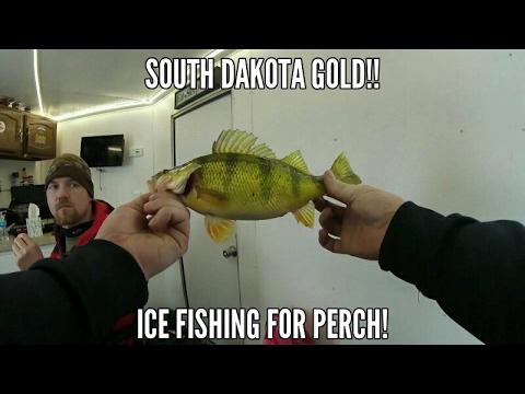 SOUTH DAKOTA GOLD!  Ice fishing for Perch!