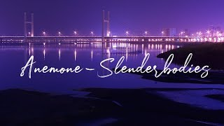 anemone - Slenderbodies (Lyrics)