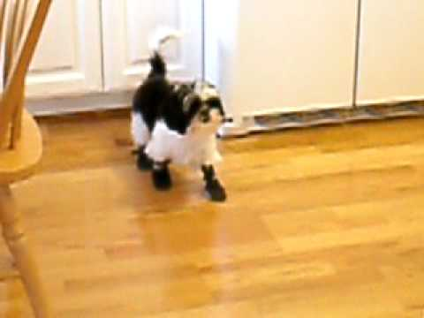 Failure to keep a puppy's feet warm