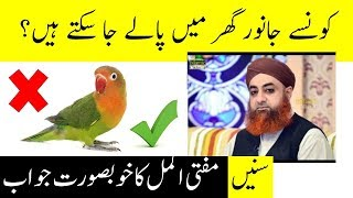 Can Muslims keep Pet Animals? || Janwar Palna Kesa?