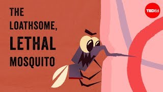 The loathsome, lethal mosquito - Rose Eveleth