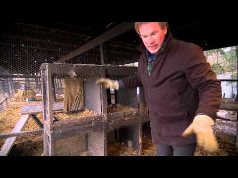 Taking Care of Muscovy Ducks | Farm Raised With P. Allen Smith