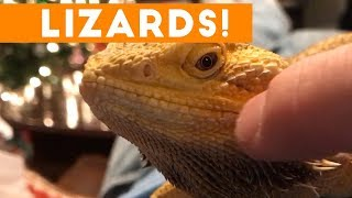 Funniest Lizard & Reptile Blooper & Reaction Videos of 2017 Compilation   Funny Pet Videos