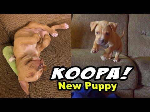 MY NEW PUPPY KOOPA!