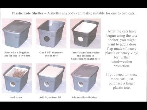 Winter Shelter for Feral Cats   DIY Stray Cat Rescue