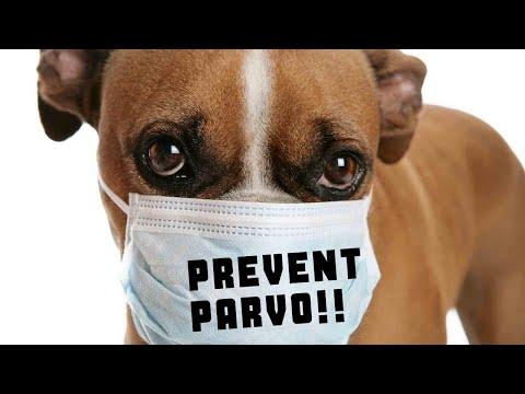 How to Prevent Parvo!!!
