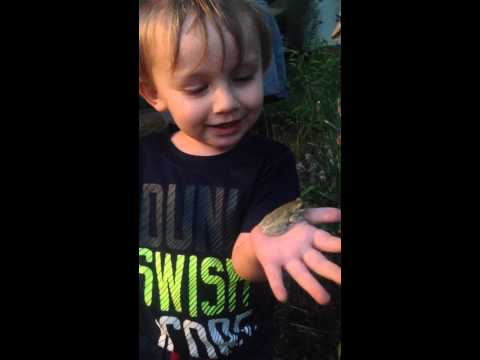 Joshua's first time holding a tree frog. Found this on the hood of my car 4-16-15