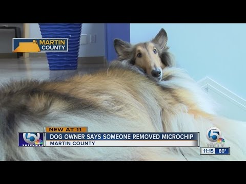 Dog owner says someone removed microship
