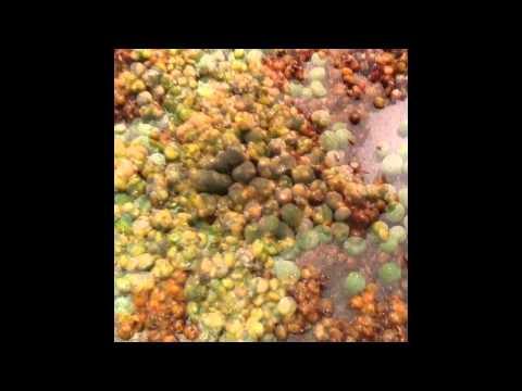 Tandoori Khichdi with Cumin Seeds, Peas and Coriander
