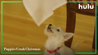 Puppies Crash Christmas • Now on Hulu