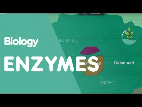 How Enzymes Denature   Biology for All   FuseSchool