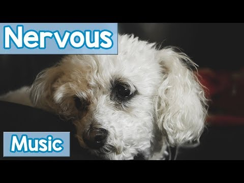 NEW Music for Nervous Dogs! Music for Dogs that are Nervous, Nervous and Anxious Dogs and Puppies!