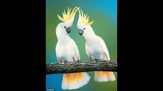 Top 10 Beautifull Birds In The World | Intresting Whatsapp Status