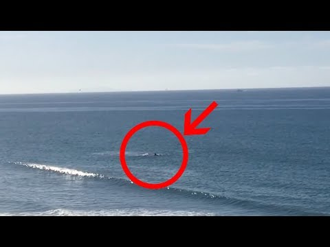 Shark attack in Santa Barbara - Rincon Beach