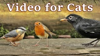 TV for Cats - Birds Sounds and Video
